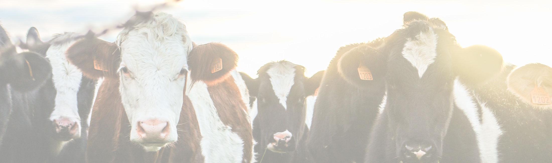 VEERkracht Dairy Congress 2019